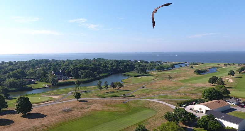Aerial photo of golf course with osprey