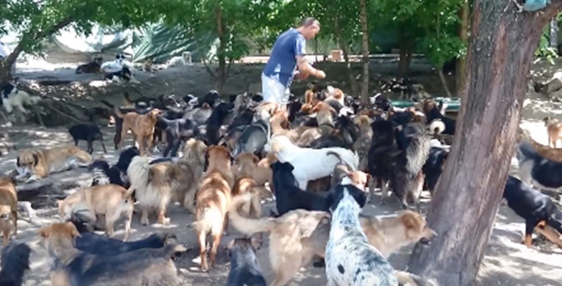 450 dogs rescued haven serbia