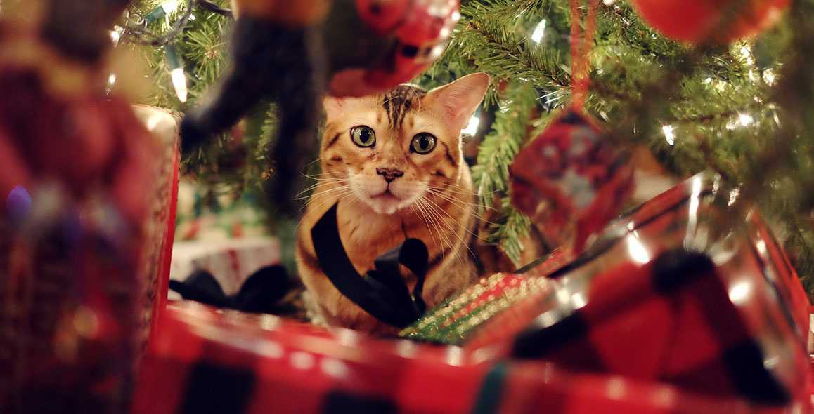 Top 5 Christmas Gifts For Your Cat