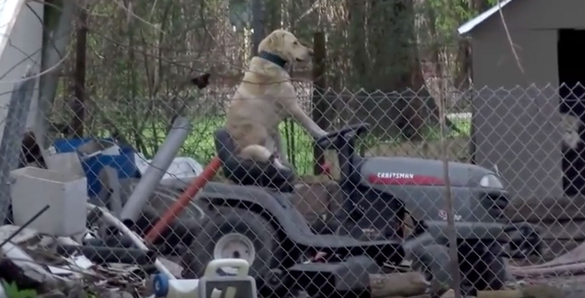 dog-riding-lawmower.jpg
